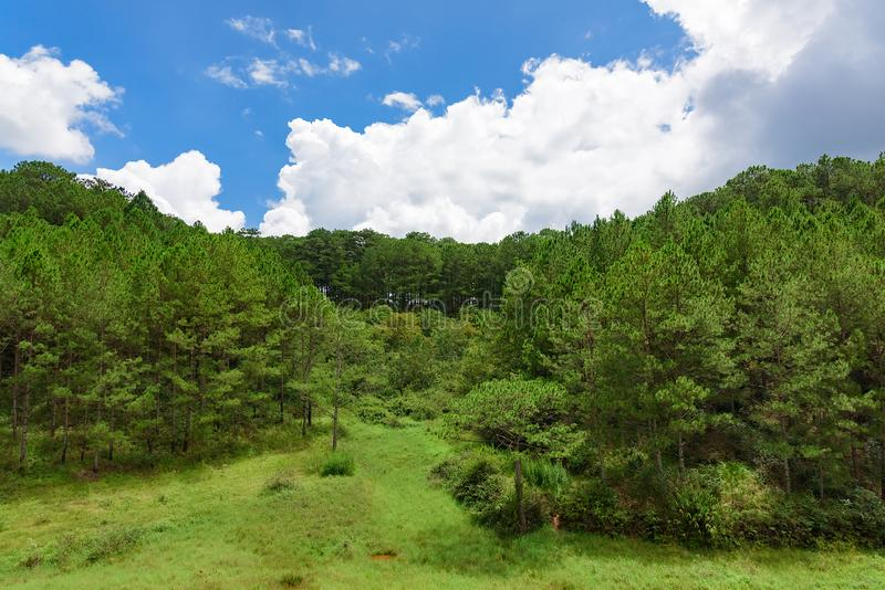 Jungle view from the top. View from the height of tropical green jungle blue sky with clouds vietnam royalty free stock images