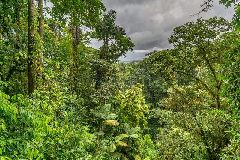 Jungle viewed from the canopy bridge. In Mistico Park Costa Rica stock photos