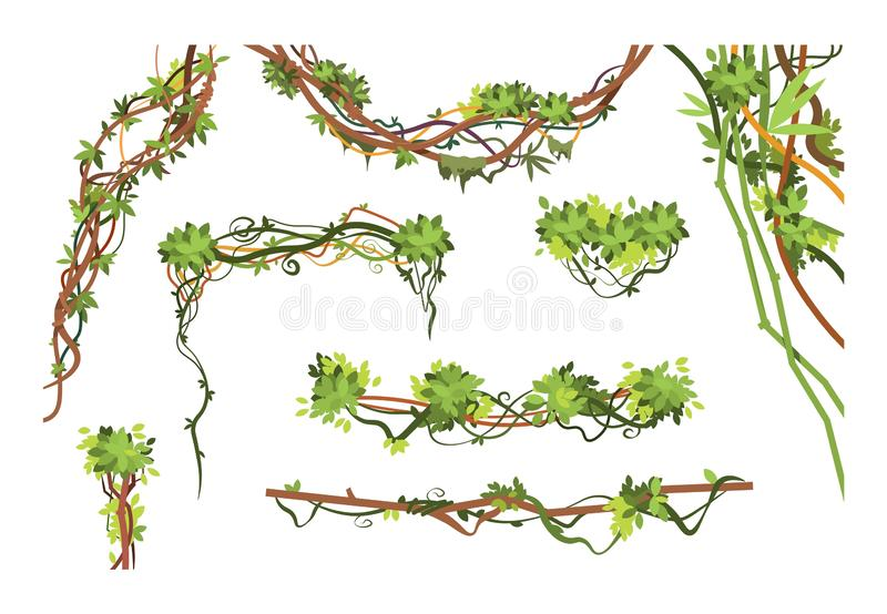 Jungle vine branches. Cartoon hanging liana plants. Jungle climbing green plant vector collection stock illustration