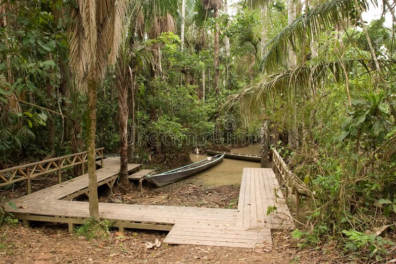 Download Jungle  Walk stock photo. Image of beauty, south, palms - 5656850