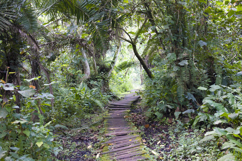 Download Jungle walking path stock image. Image of flora, tropes - 25976181