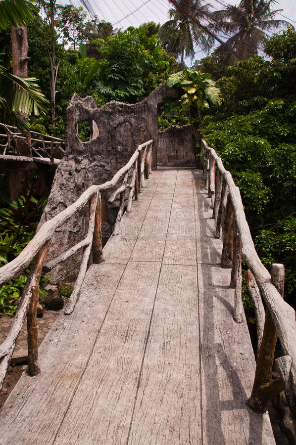 Download Jungle walkway stock photo. Image of land, costarica - 20779406