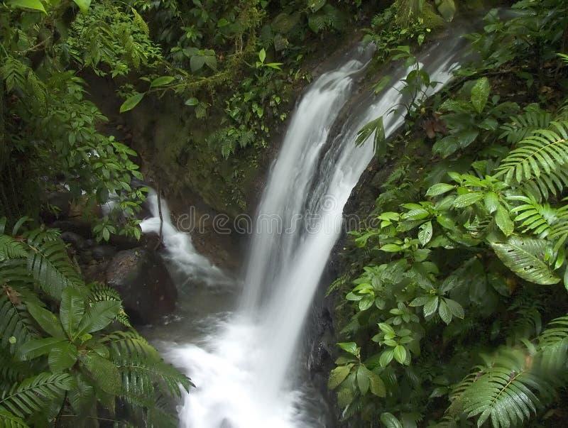 Jungle waterfall stock photography