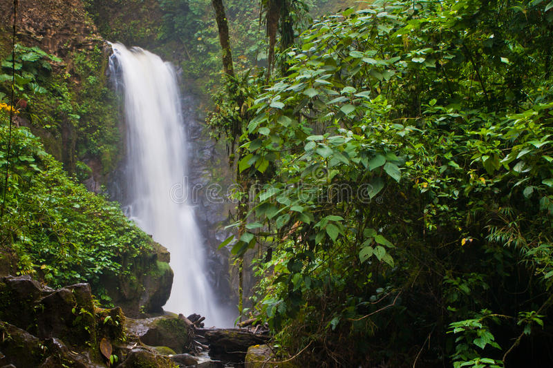 Download Jungle waterfall stock photo. Image of falls, ledge, vegetation - 23759664