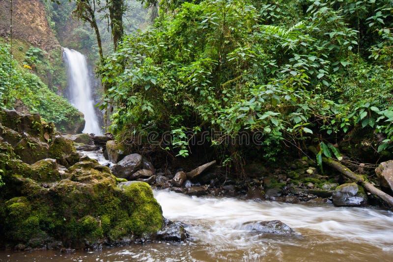 Jungle waterfall royalty free stock photos