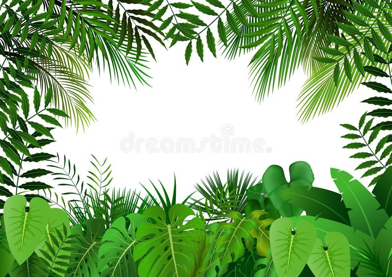 Jungle on white background stock photos