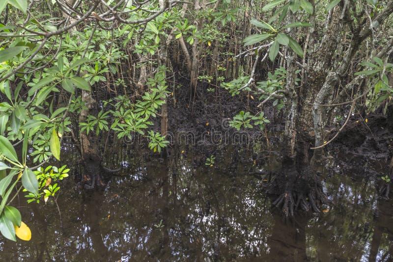 Jungle in Zanzibar stock photography