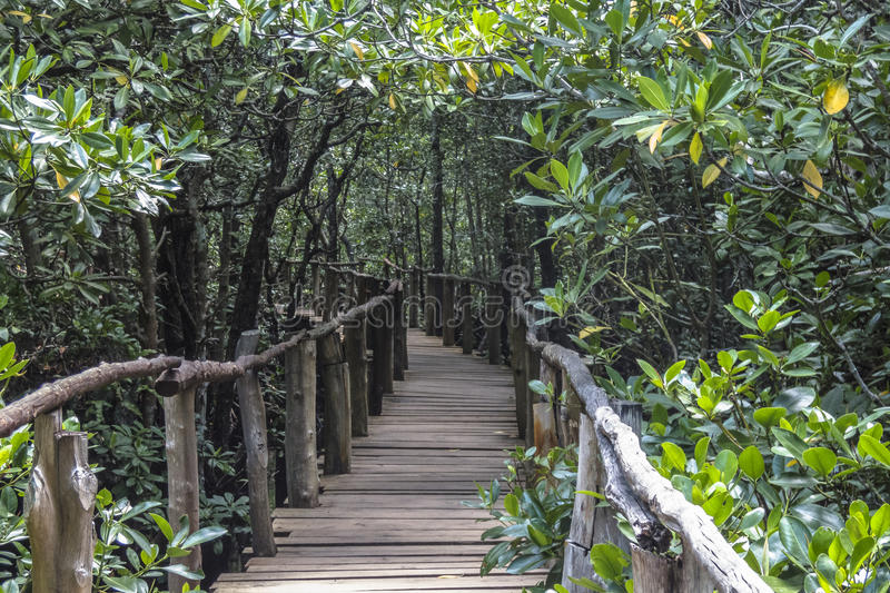 Jungle in Zanzibar. Mangrove forest in Jungle in National Park in Zanzibar . Tanzania . Africa royalty free stock image