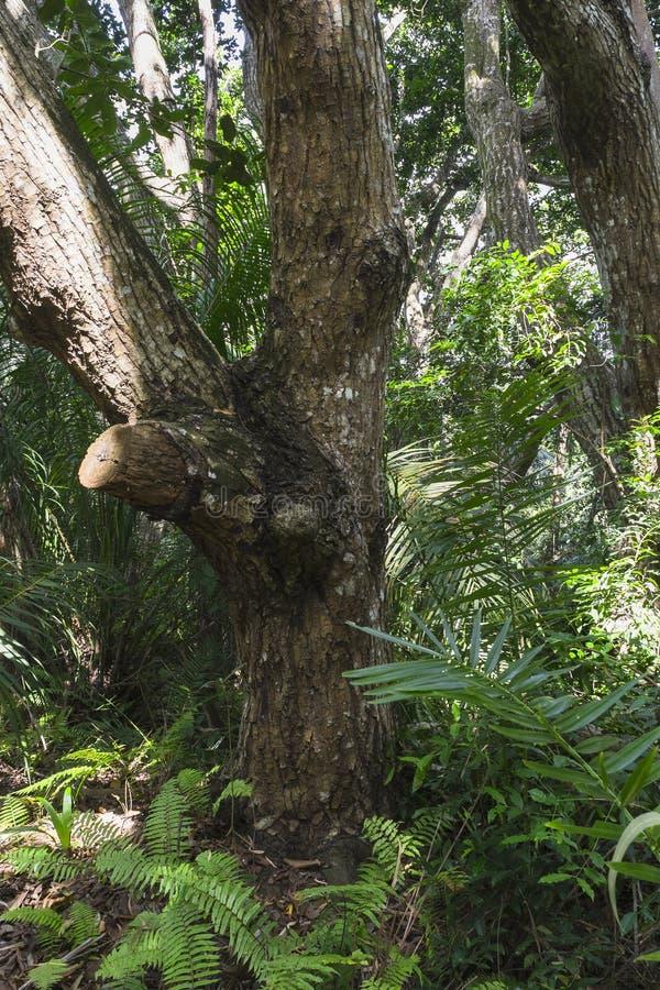 Jungle in Zanzibar stock images