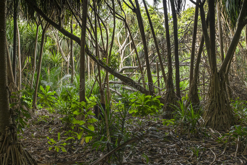 Jungle in Zanzibar stock photos