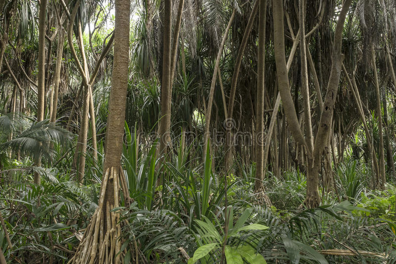 Jungle in Zanzibar royalty free stock photo