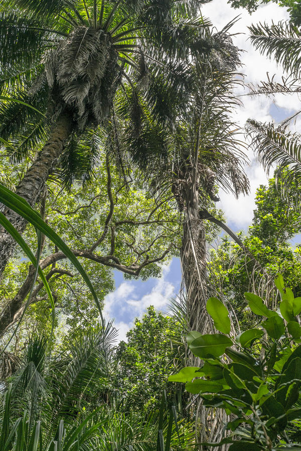 Jungle in Zanzibar stock photo
