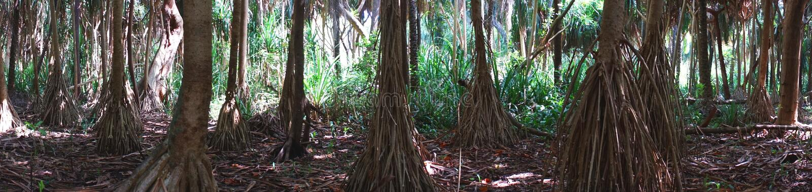 Jungle in Zanzibar. Panoramic photo of Jungle in National Park in Zanzibar . Tanzania . Africa stock image