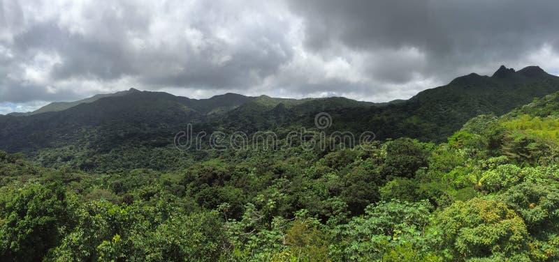 Jungles dans la réserve forestière d'EL Yunque image libre de droits