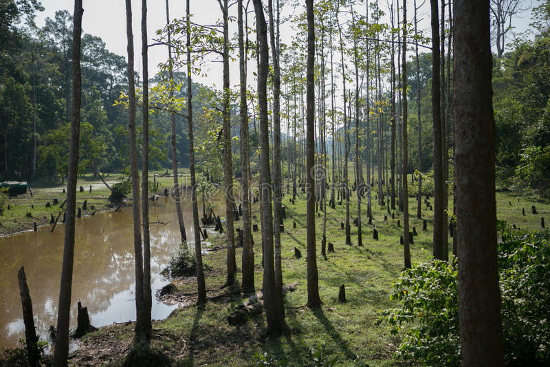 Jungles de temples de Combodia image stock