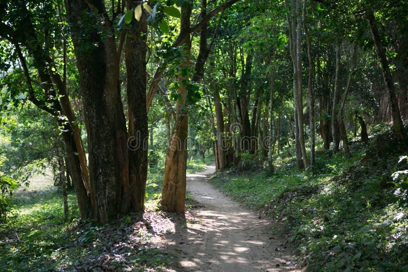 Jungles de temples de Combodia photos libres de droits