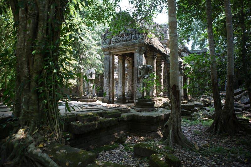Jungles de temples de Combodia images libres de droits