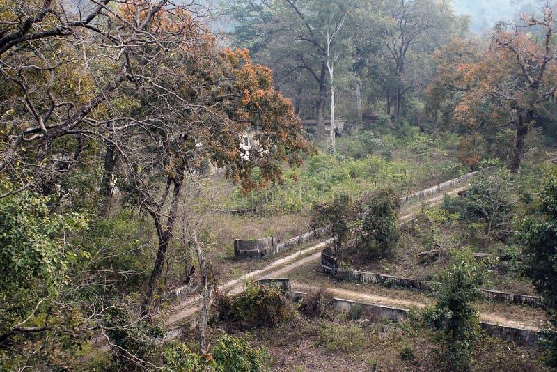 Jungles et ruines images libres de droits