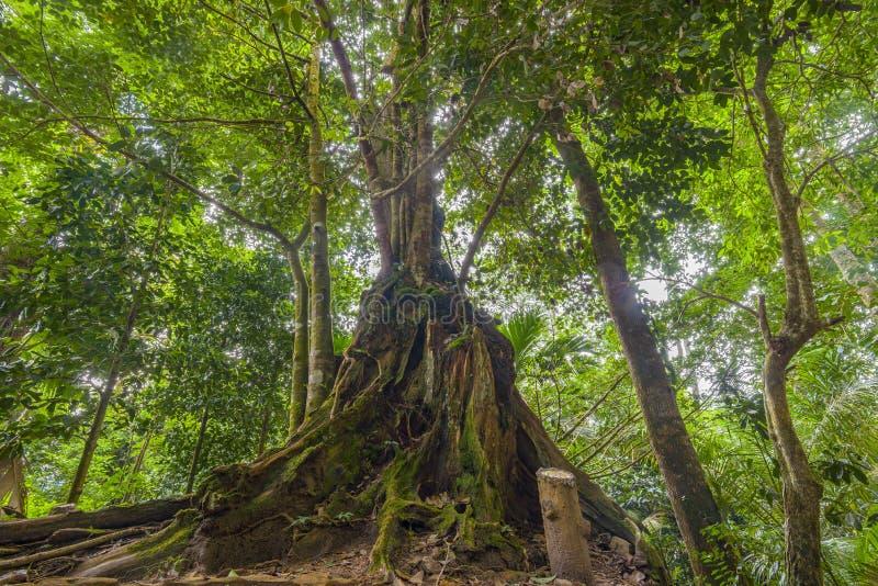 Jungles, Seychelles photos stock