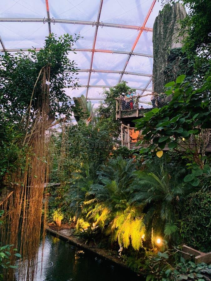 jungles image stock