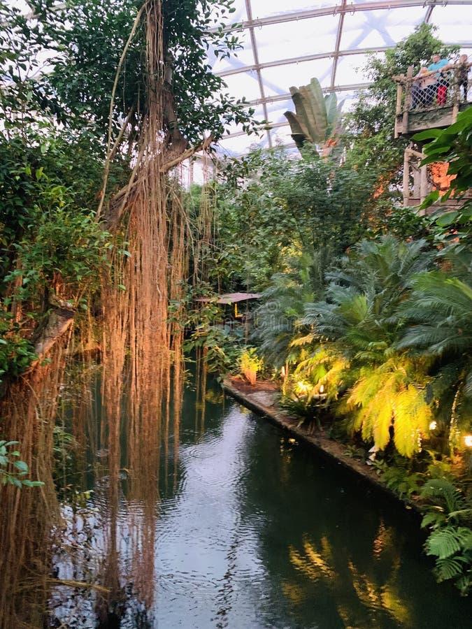 jungles photos stock