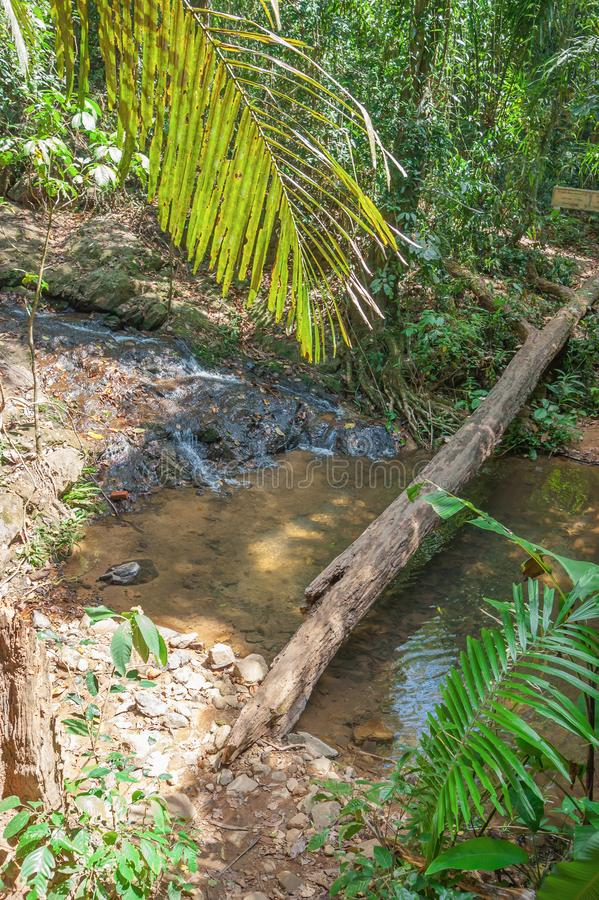 Jungles tropicales image stock