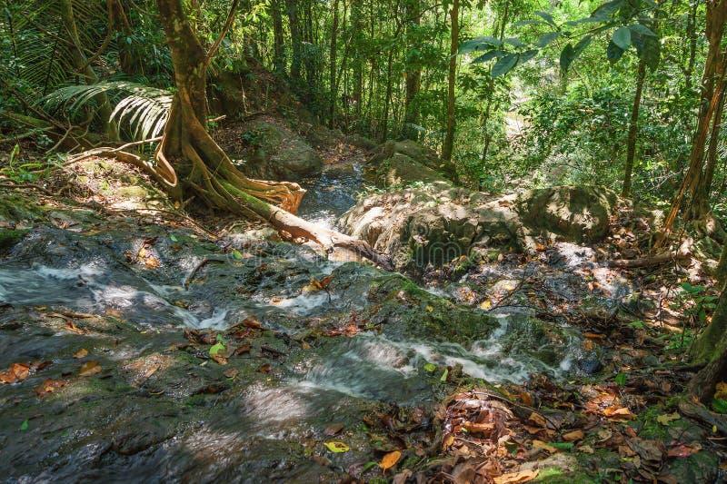 Jungles tropicales image libre de droits