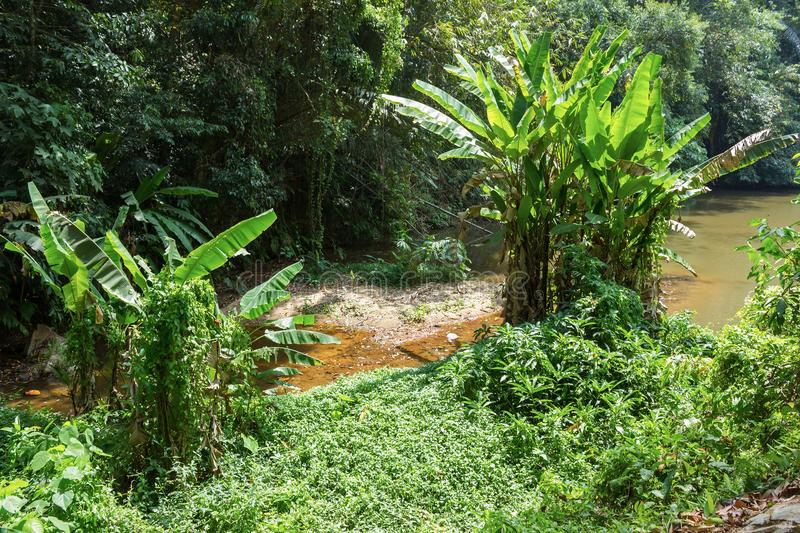 Jungles tropicales photo stock