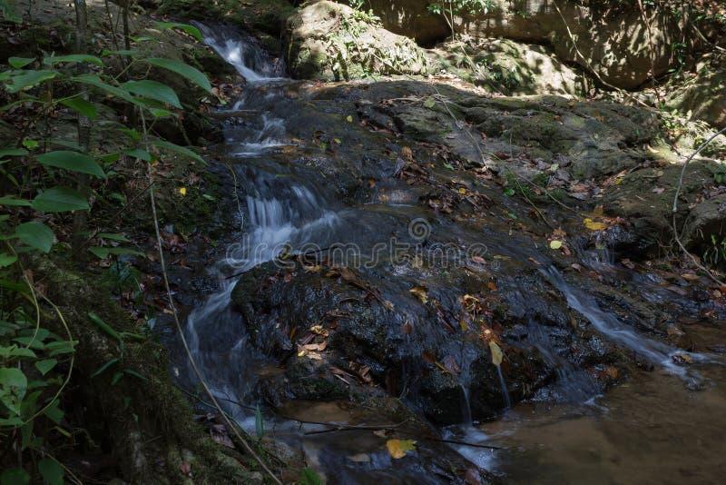 Jungles tropicales images libres de droits