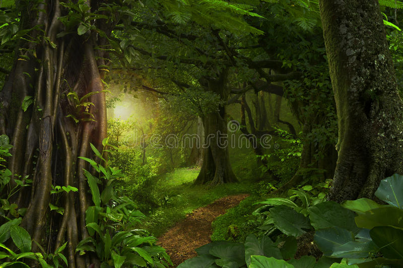 Jungles tropicales profondes image stock