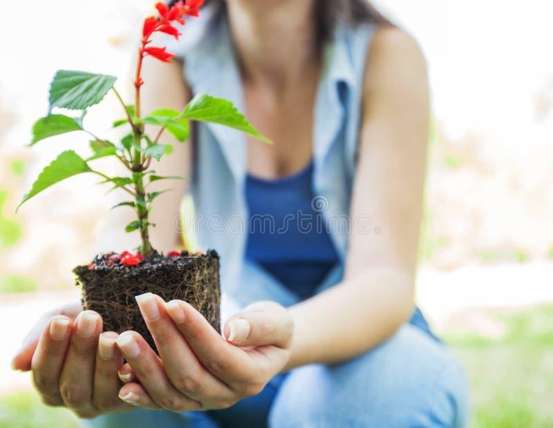 Jungpflanze bereit zum Sämling lizenzfreies stockbild