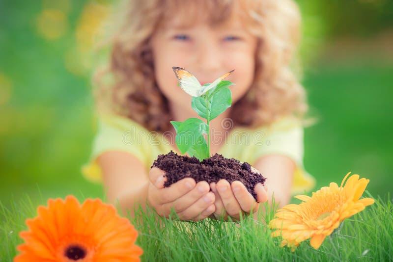 Jungpflanze gegen grünen Hintergrund lizenzfreie stockfotografie