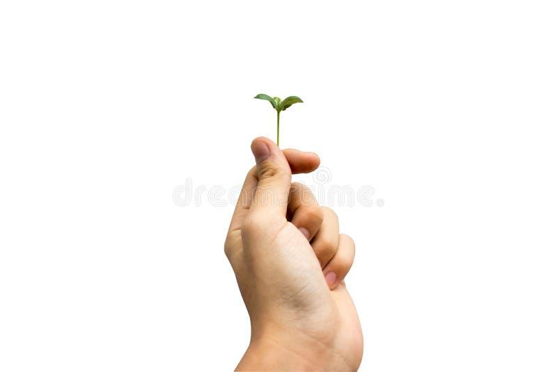 Jungpflanze an Hand lokalisiert auf weißem Hintergrund lizenzfreie stockbilder