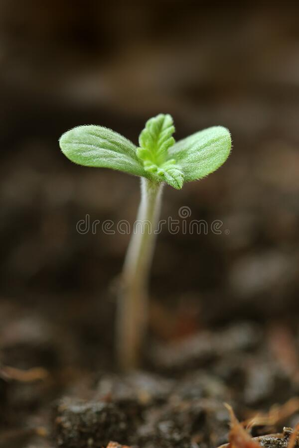 Jungpflanzenanbau im Garten lizenzfreies stockfoto