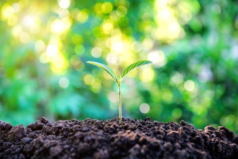 Jungpflanzewachsen lizenzfreies stockfoto