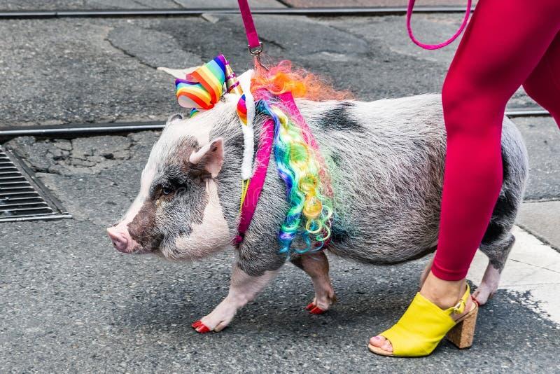 Juni 30, 2019 San Francisco/CA/USA - gulligt svin som smyckas med regnbågeflaggan, deltagande på SFEN Pride Parade på marknad arkivfoto