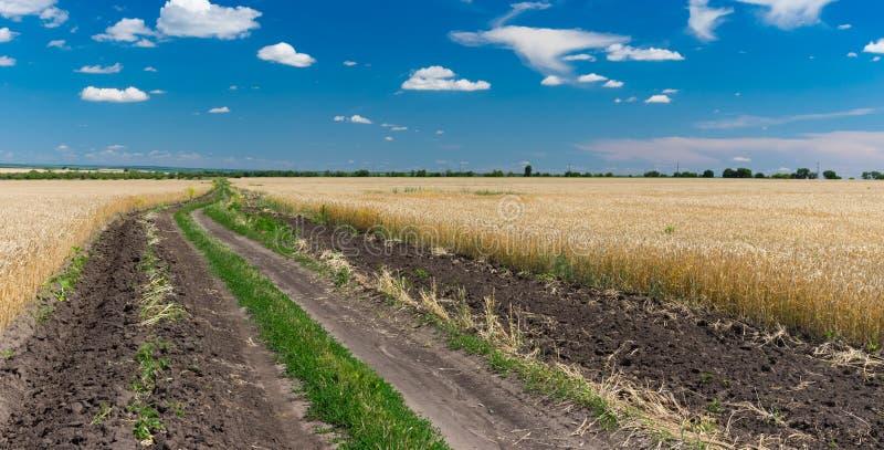 Juni ukrainskt lantligt landskap med vetefält och jordvägen between arkivbilder