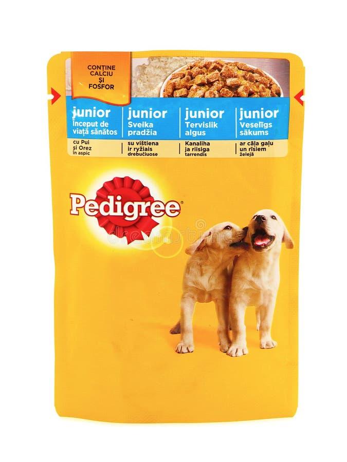Junior de pure race, poches des aliments pour chiens humides photographie stock libre de droits