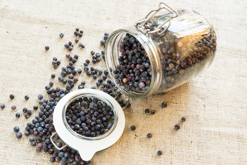 Juniper berries stock images