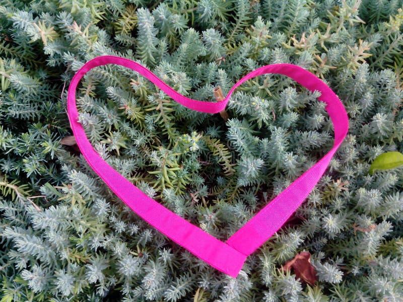 Juniper heart stock images