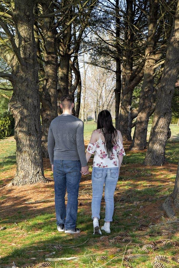 Junte el walkingi entre los árboles de pino altos que llevan a cabo las manos imagen de archivo