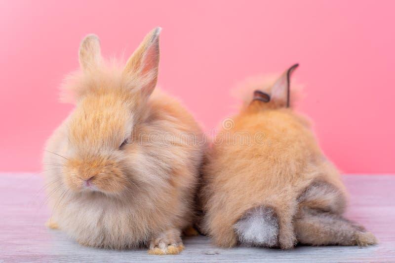 Junte los pequeños conejos marrones claros permanecen en la tabla de madera gris y el fondo rosado con uno está durmiendo y la  imagenes de archivo