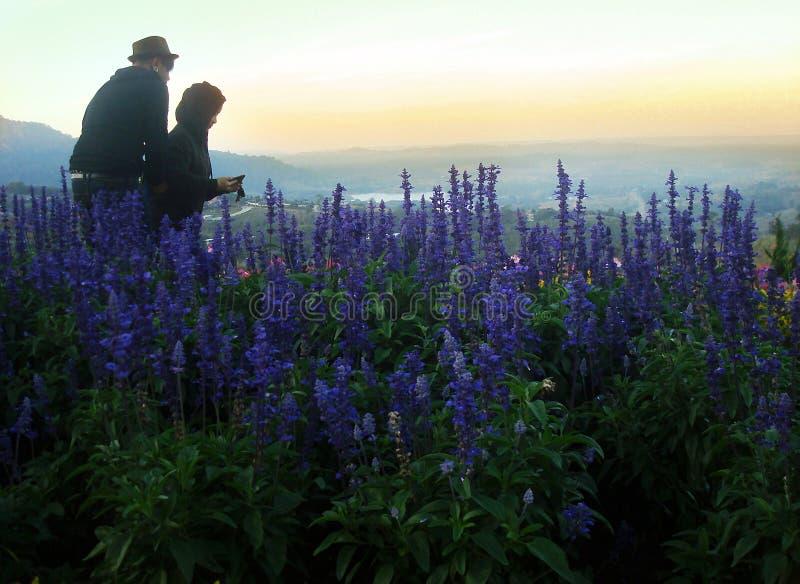 Junte precioso en el paisaje con la alta hierba salvaje y las flores púrpuras en la colina en alta montaña fotografía de archivo