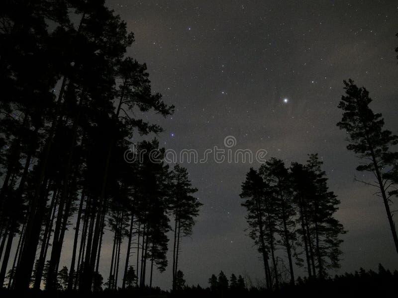 Jupiter för stjärnor för natthimmel över skog fotografering för bildbyråer