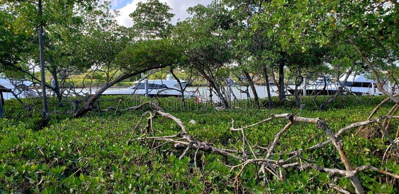 Jupiter Florida Intercoastal Waterway fotografering för bildbyråer