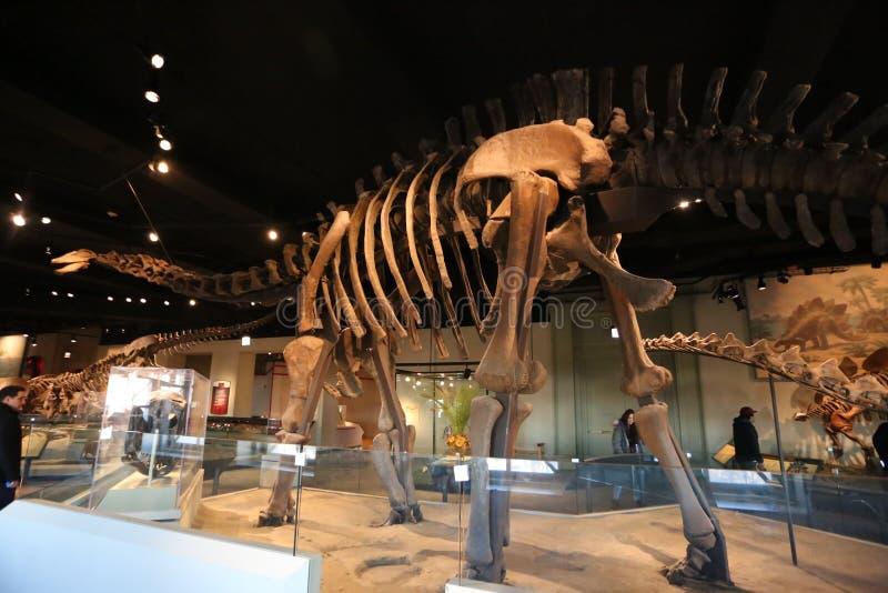 Jurassic περίοδος στοκ φωτογραφίες με δικαίωμα ελεύθερης χρήσης