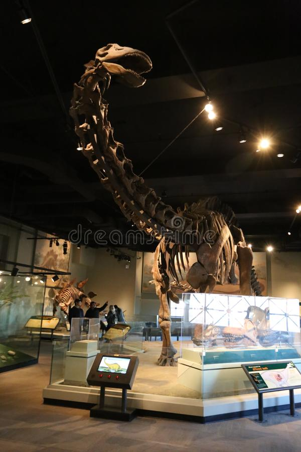 Jurassic period royaltyfri foto