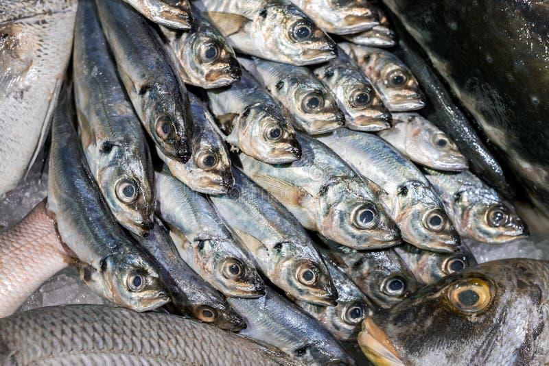 Jureles frescos crudos en el contador de la exhibición en el mercado de pescados local del granjero imagenes de archivo