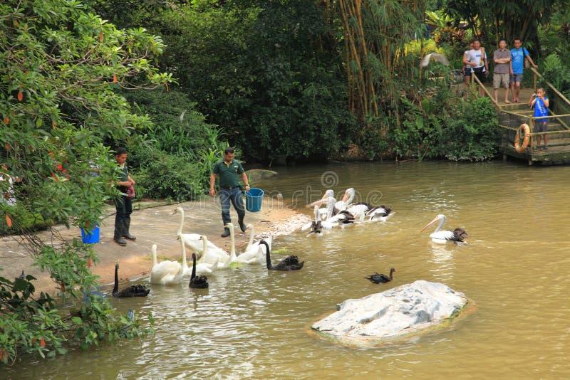 Jurong-Vogel-Park in Singapur lizenzfreies stockfoto