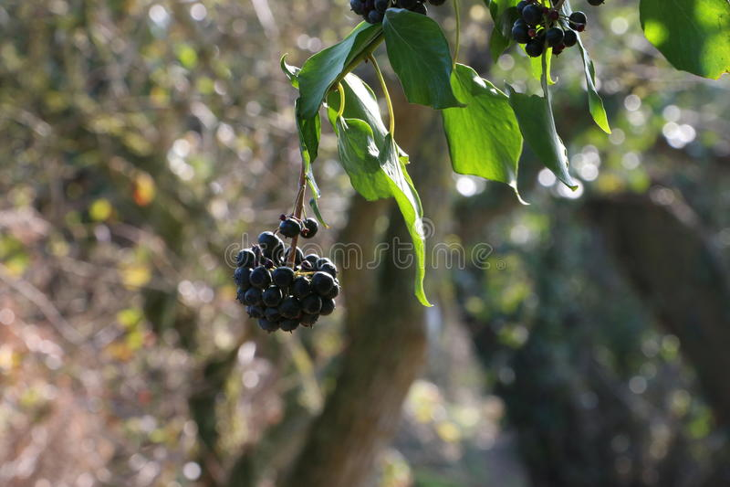 Jus de fruit photo stock